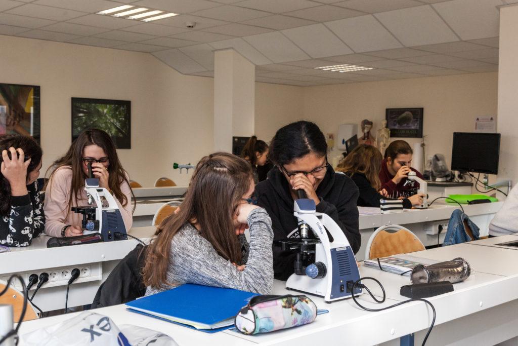 Les élèves font des observations au microscope